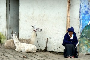 Old Woman with Alpacas in San Pablo, Ecuador