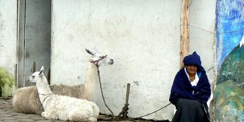 Old Woman with Alpacas in San Pablo, Ecuador