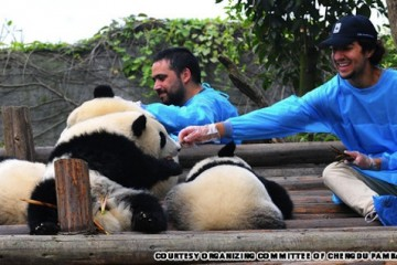 panda-main