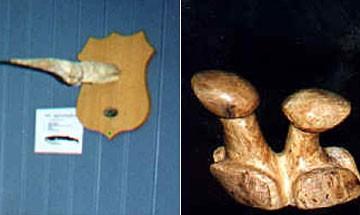 "Phallological ""Penis"" Museum, Iceland"