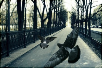 Wayward Pigeons, Moscow