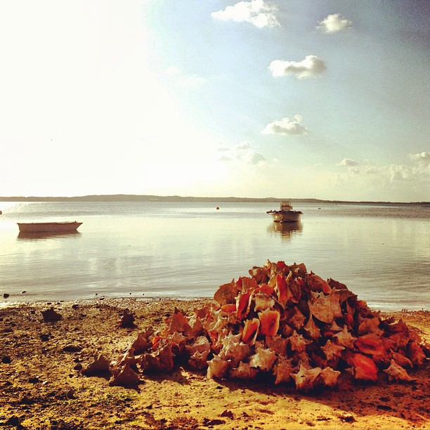 Large Pile of Conch Shells, Harbour Island, Bahamas