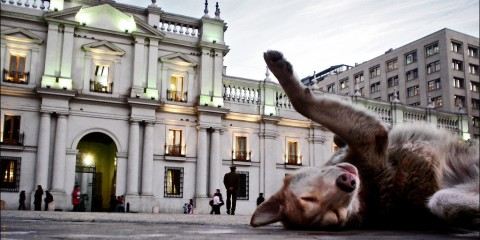 Dog Rolling Over at Plaza de la Constitución, Chile
