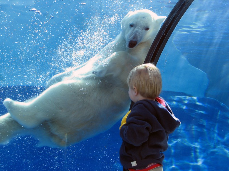 Polar Bear & Young Boy at Detroit Zoo