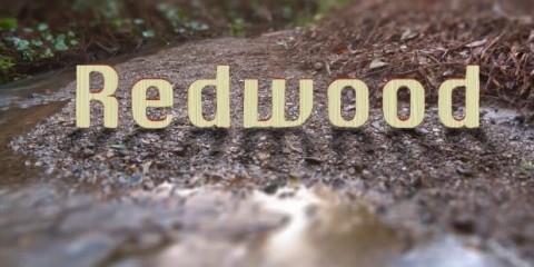 redwood-trees-video-california-screenshot