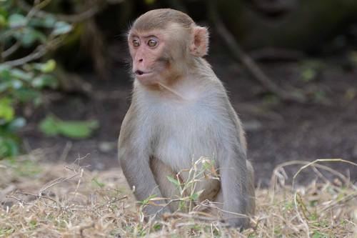 Florida's Latest Problem: Herpes Infected Feral Monkeys — Vagabondish
