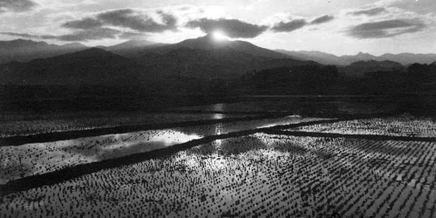 Rice paddies of Korea, 1945