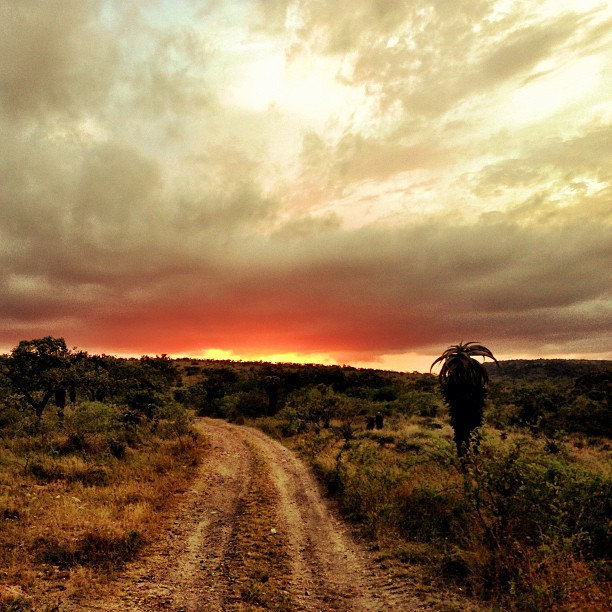 The Road to Hell, Mkhuze Game Reserve, South Africa