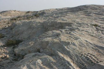 Rock Carvings of Al Jassasiya, Qatar