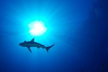 shark-6741931507