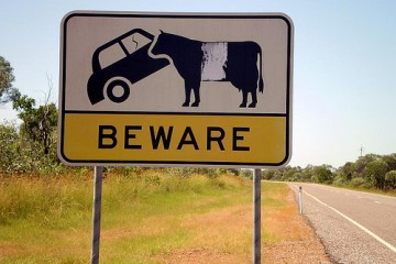 Signspotting: Beware of Car-Eating Cattle Ahead, Queensland