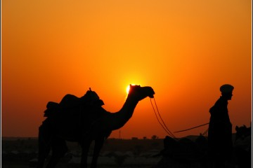 Silhouette of Man & Camel in Sam Desert Jaisalmer, Rajasthan, India
