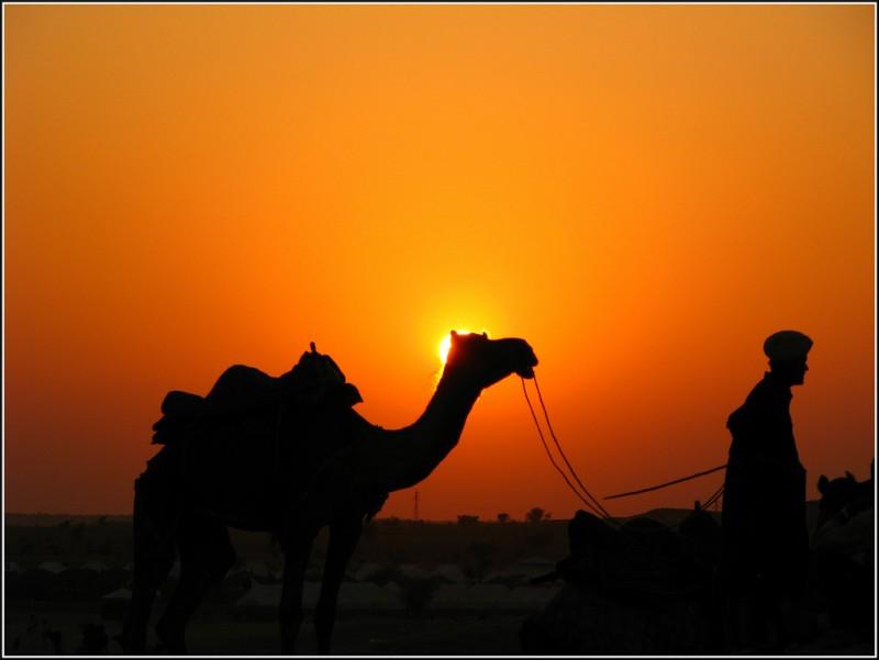 Silhouette of Man & Camel in Sam Desert Jaisalmer, Rajasthan, India