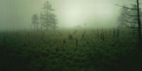 Solitude in the Mist, Belgium