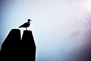 solo-bird-4066636825