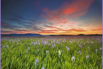 Sunrise Over Camas Prairie, Idaho