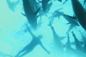 Swimming with Bluefin Tuna, Port Lincoln
