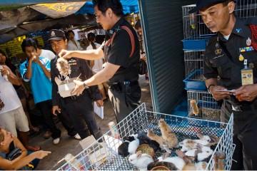 Thai Police Raid on Endangered Animal Trafficking