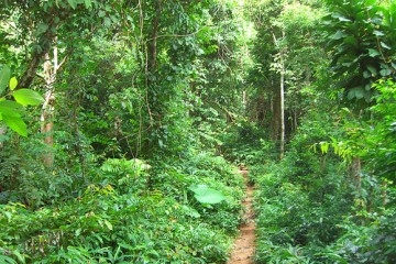 Jungle Path in Thailand