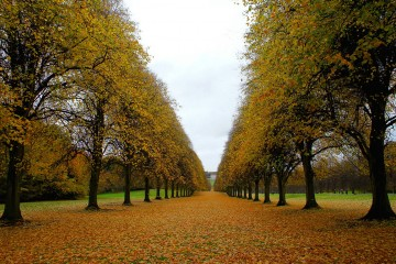 Along the Tree Line, Belfast, Northern Ireland