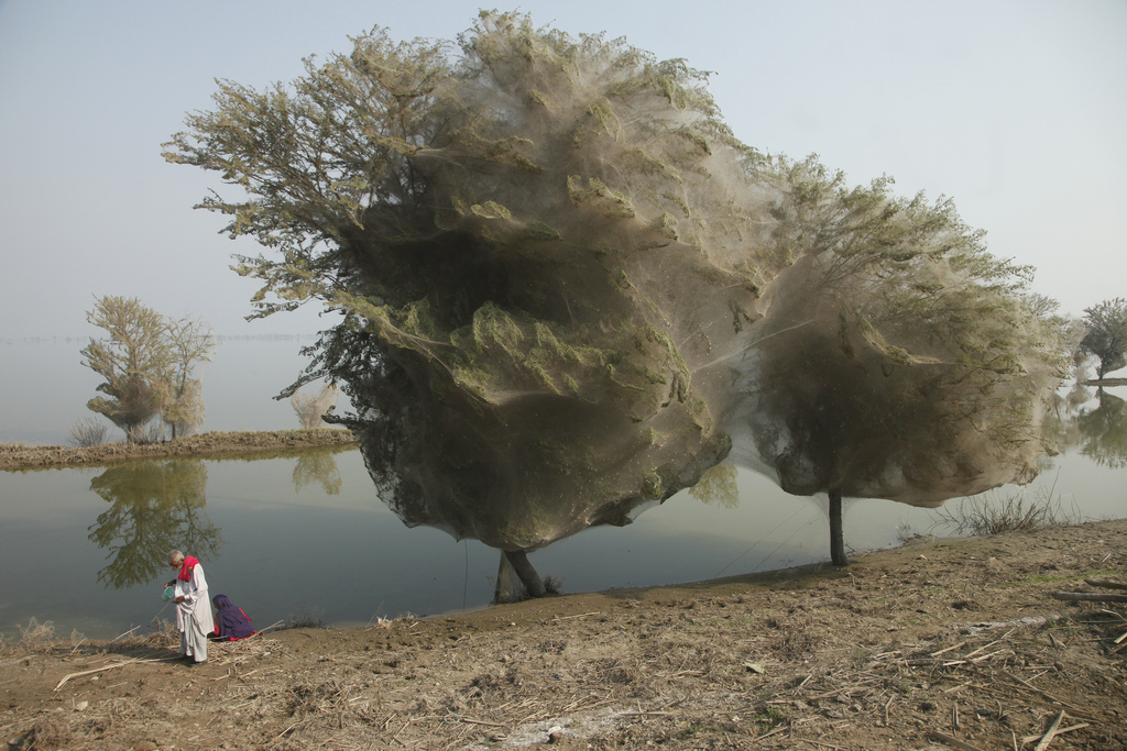 Photo of the Moment: Trees Cocooned in Spider Webs, Pakistan — Vagabondish