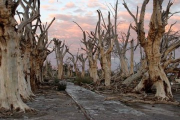 An avenue of eerie drowned trees