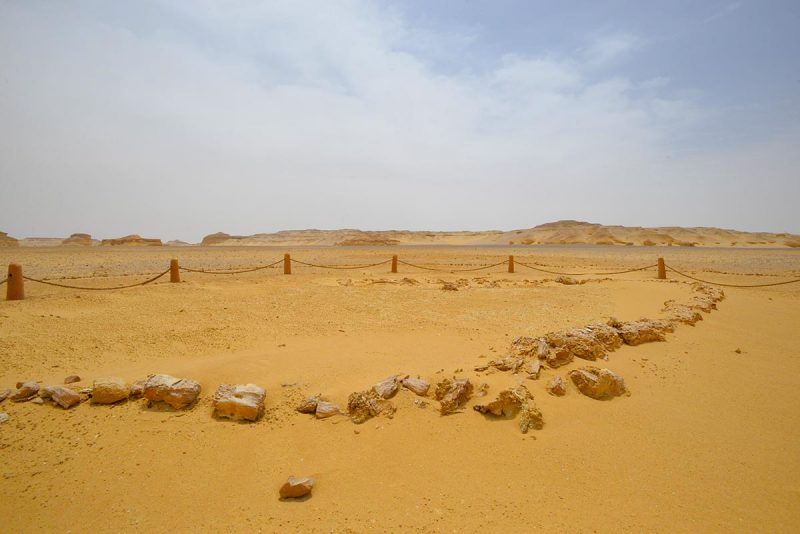 Egypt's Valley of the Whales (Wadi Al-Hitan)
