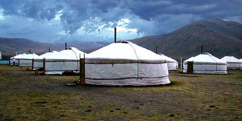 Volunteer camp in Hustai Park, Mongolia