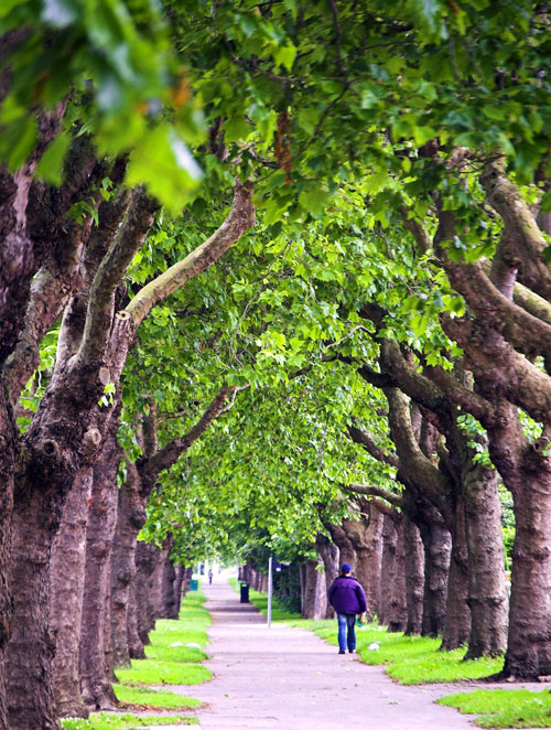 Walking the Green Paths, Dublin