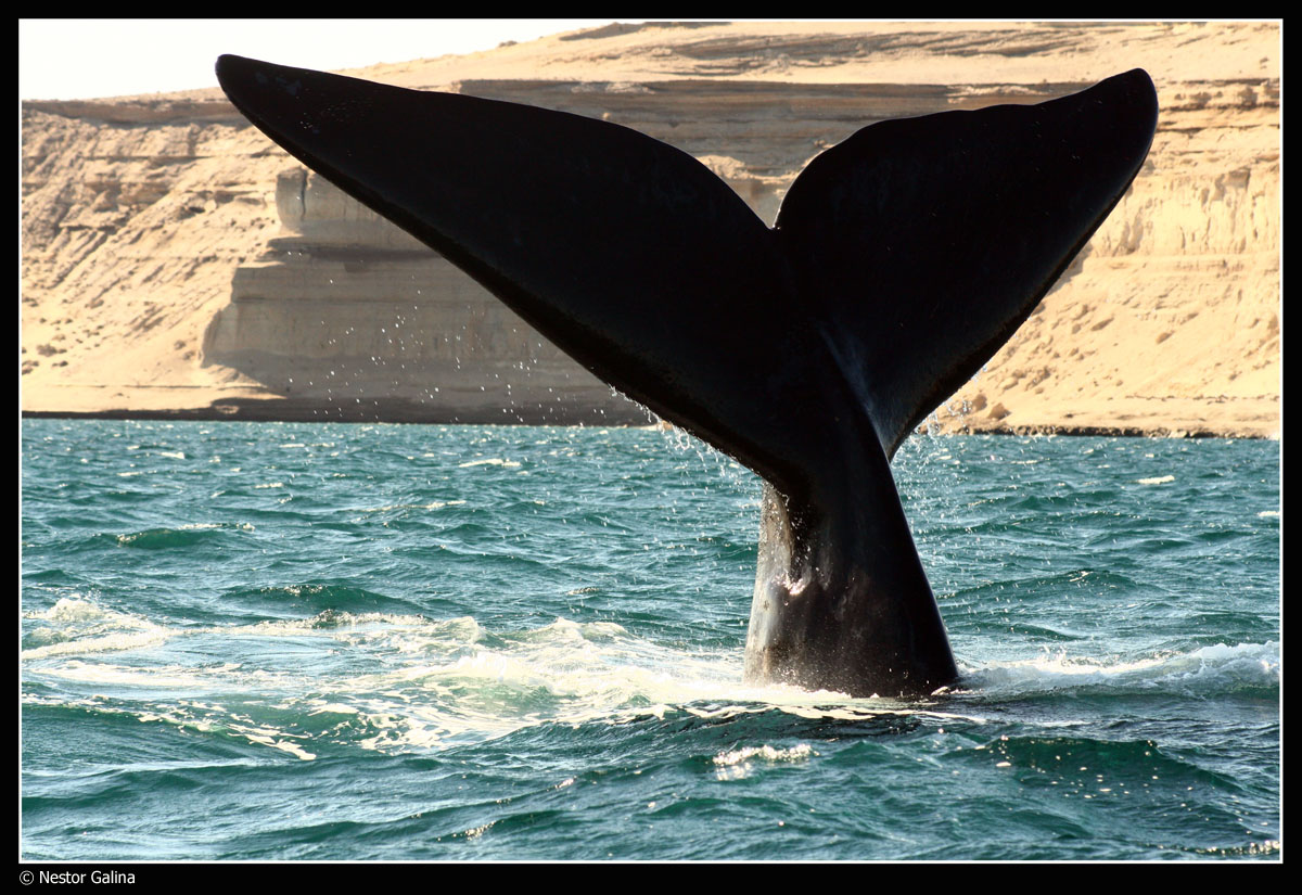 Photo of the Moment: Save the Whales, Patagonia — Vagabondish